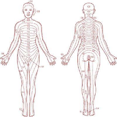programma corso massaggio connettivale riflessogeno