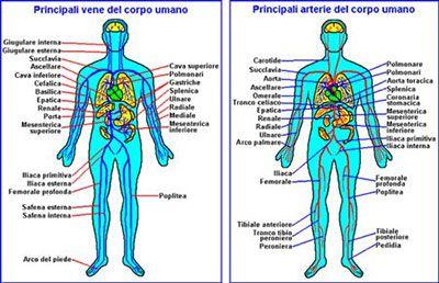 vene e arterie corpo umano