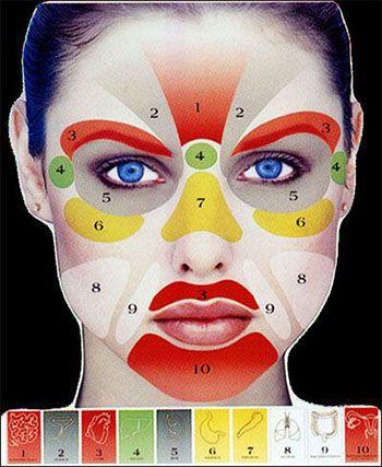tessuti connettivi del viso